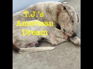 T.J.'s American Dream